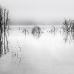 SALON-GOLD_Vicki_Moritz_AU_Eildon-morning-mono