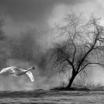 2_Prelet-XBW_Aleksander Cufar