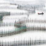 FIAP HM-In-the-Fishing-Pond-Chun-Yip-Chau,-Hong-Kong-S.A.R