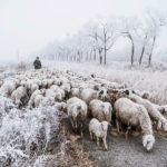 Baojian Li_China - Winter grazing_FIAP Honorable mention