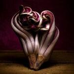 fichi-d-india-e-radicchio-cuore-5_Donatella-Tandelli,-Italy